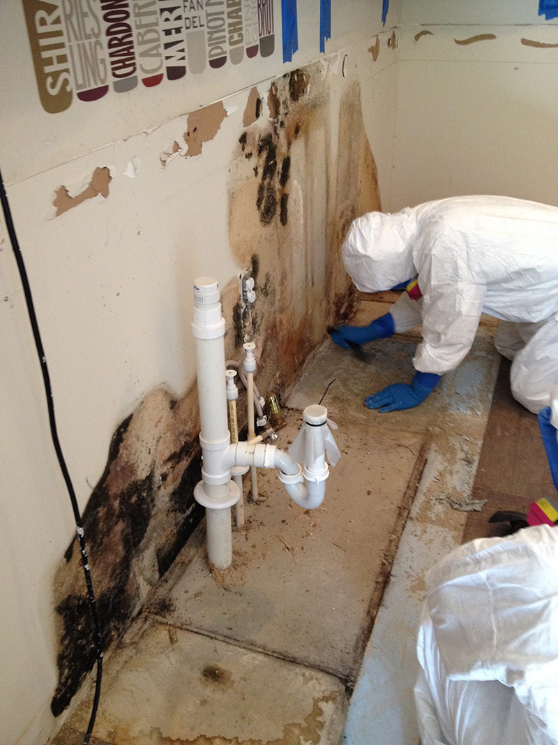 mold removal pascagoula ms